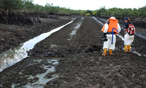 Ogoni Clean-up: HYPREP Completes Remediation of Five Sites ...