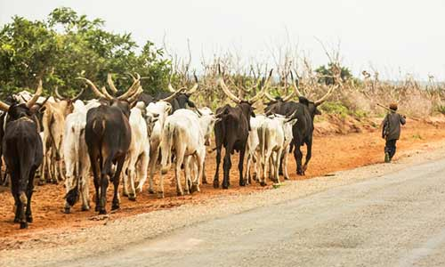 The Benue Anti-Open Grazing Law-Download Copy - TheNigeriaLawyer